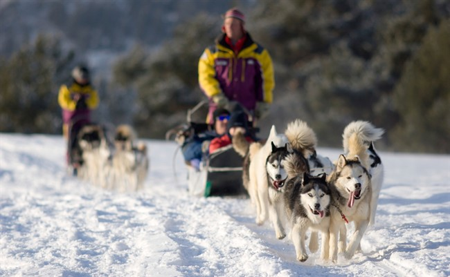 Gal Act Dogsled1